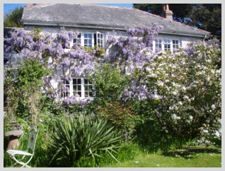 Rosemerryn Wood - House wisteria