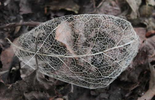 Mark Longair - Leaf Skeleton - 2010 - 42