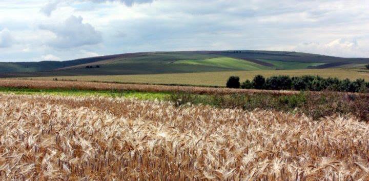 Avebury+-+Corn+2+.jpg