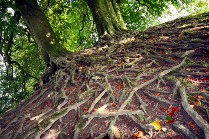 The Old Trees - Avebury Henge