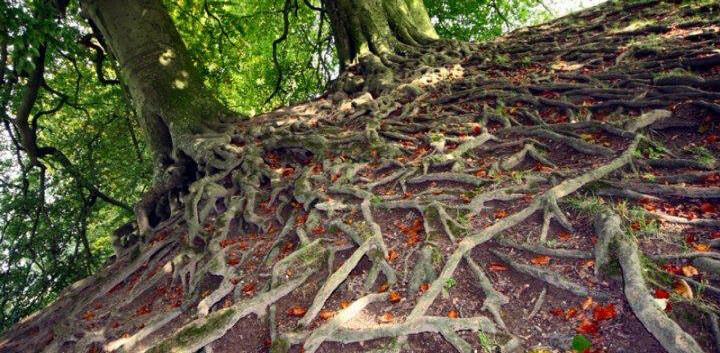Avebury+Roots.jpg