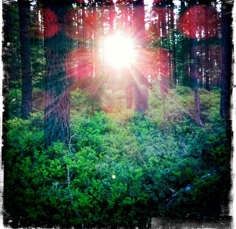 Borntorpet - Forest Light