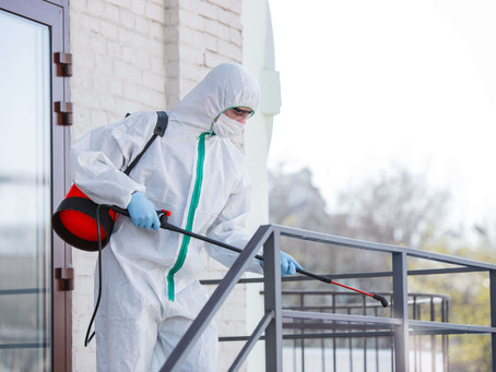 What You Need to Know About Pest Control Services In San Diego