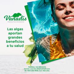 020-FB-Vanadis.png