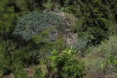 Cascade Bras Rouge GRR2