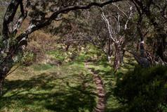Sentier Mouton