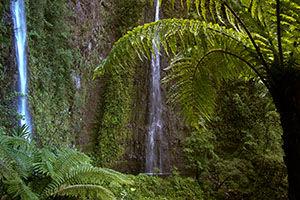 Cascade Bras d'Annette Grand Etang Réunion
