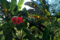 Le poinsettia  Les parties vivement colorées du poinsettia ne sont pas des fleurs. Ce sont des feuilles modifiées qui entourent les vraies fleurs, minuscules et jaunes.