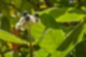 Bois d'Osto Mare Longue Ile Réunion