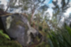 2P5A4002_edited.jpg