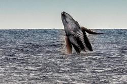 baleine à Saint-Gilles Réunion