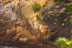 Falaise du Cap Jaune
