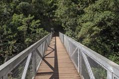 Pont de Liane