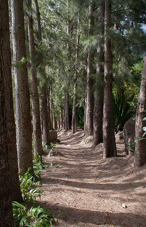 Sentier des filaos Ilet à Malheur Mafate