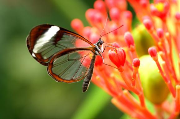 Serre au papillons
