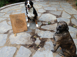 Beware Dogs, No Pooping on the Patio