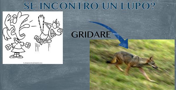 Indicazioni di comportamento in presenza di lupi