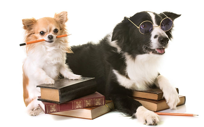 dogs-in-school-PLM8N54_edited.jpg
