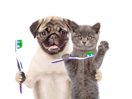 Dental Services for Pets in Union County, NJ just become better!