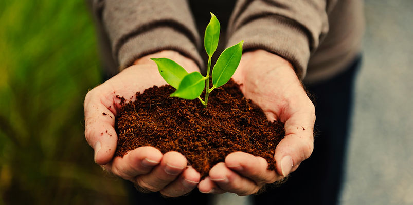 hands-holding-a-pile-of-earth-soil-with-