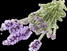 lavender-flowers-97G82VN_edited.png