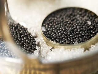 IT IS THE TIME OF CAVIAR PARTY!