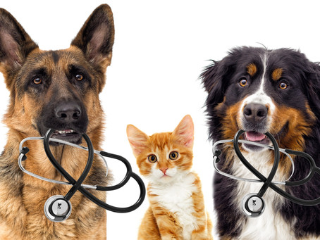 KEEPING YOUR PET SAFE. WHAT IS POISONOUS?
