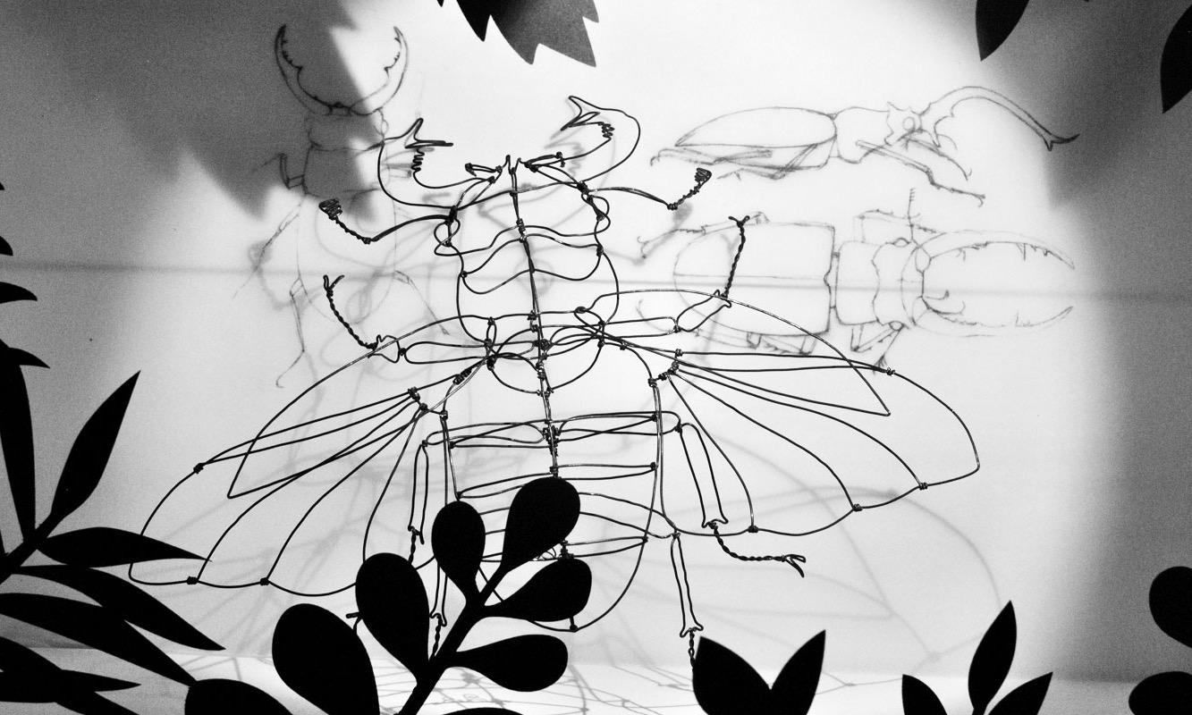 Lucane cerf-volant et esquisses
