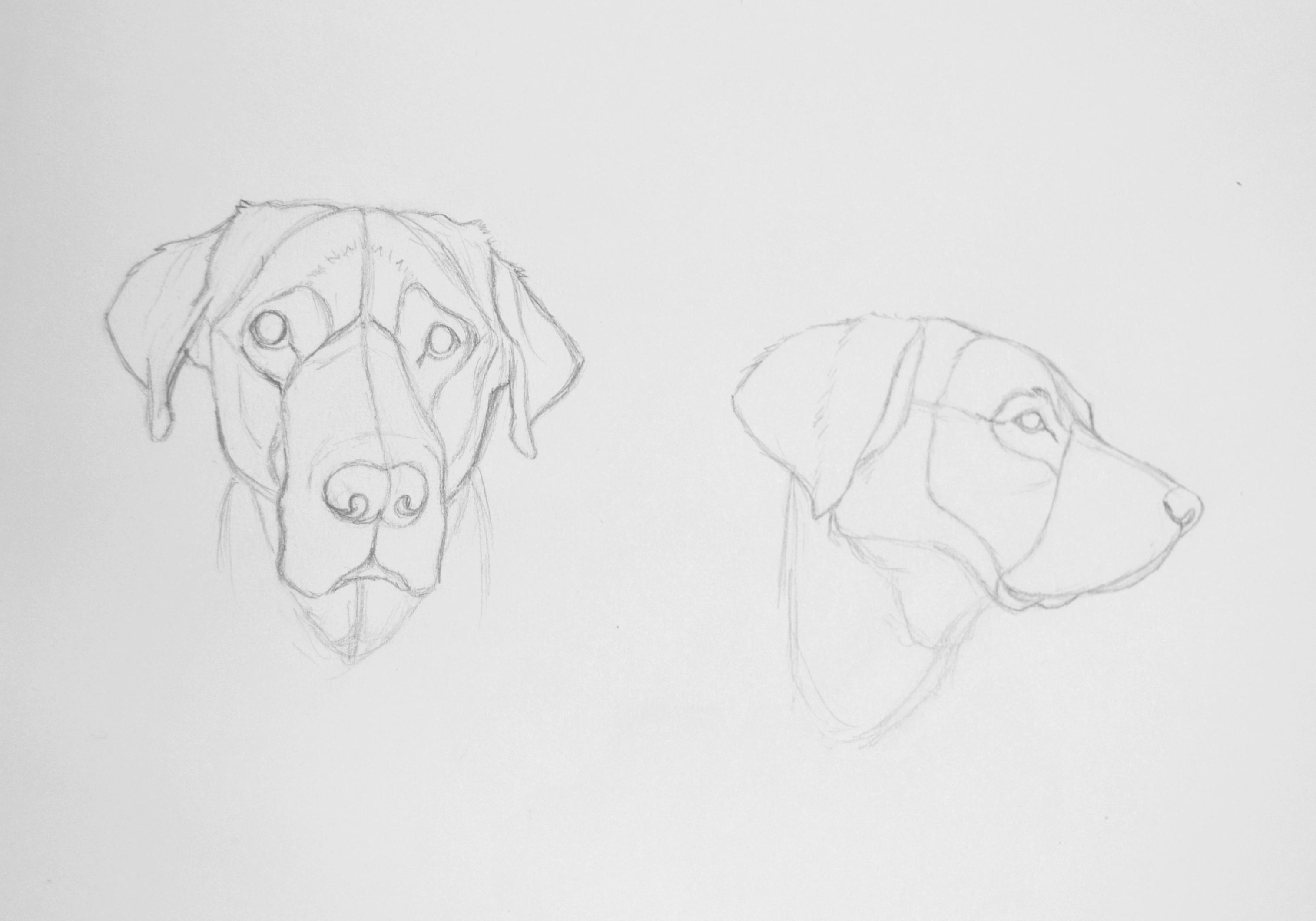 Esquisses de Labrador