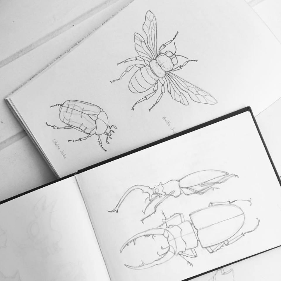 insectes esquisses