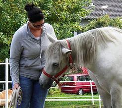 Coachig mit Pferden