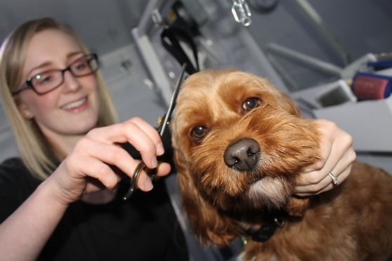 DogSmart Mobile Grooming
