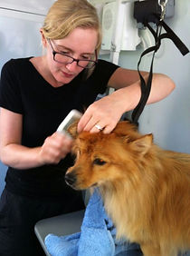 DogSmart Mobile Dog Groomer Helen