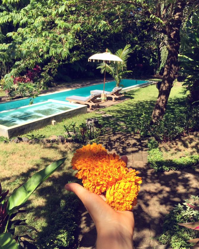 CeliaB around the world. First stop: Bali