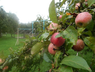 Благотворительная ярмарка «Хоробровское яблочко»
