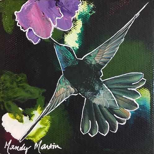 Magnificent Hummingbird 1
