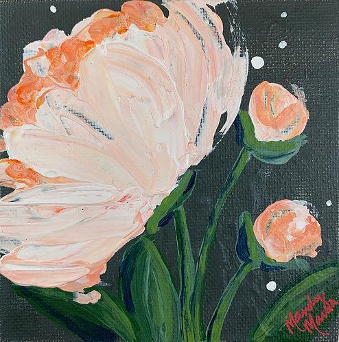 Bloom 5