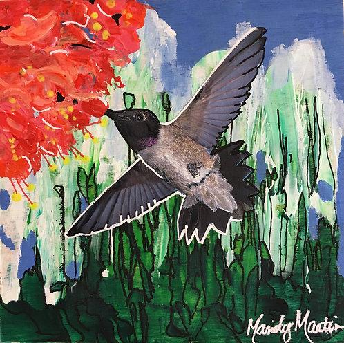 Black-Chinned Hummingbird 1