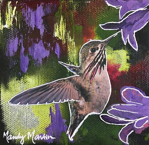 Calliope Hummingbird 2