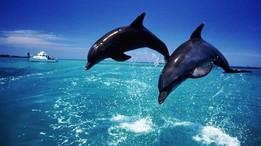 Дельфины любят Грецию (видео)