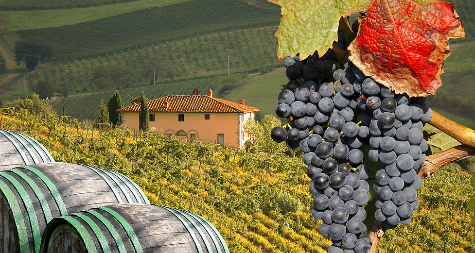 small-private-tours-italy-vineyard-umbria.