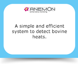 A simple and efficient system to detect bovine heats.