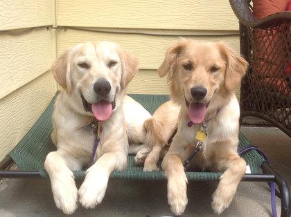 Ajax and Phoebe, Life Skills & Fast Track Programs