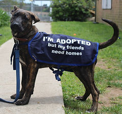Adopted Shelter Dog