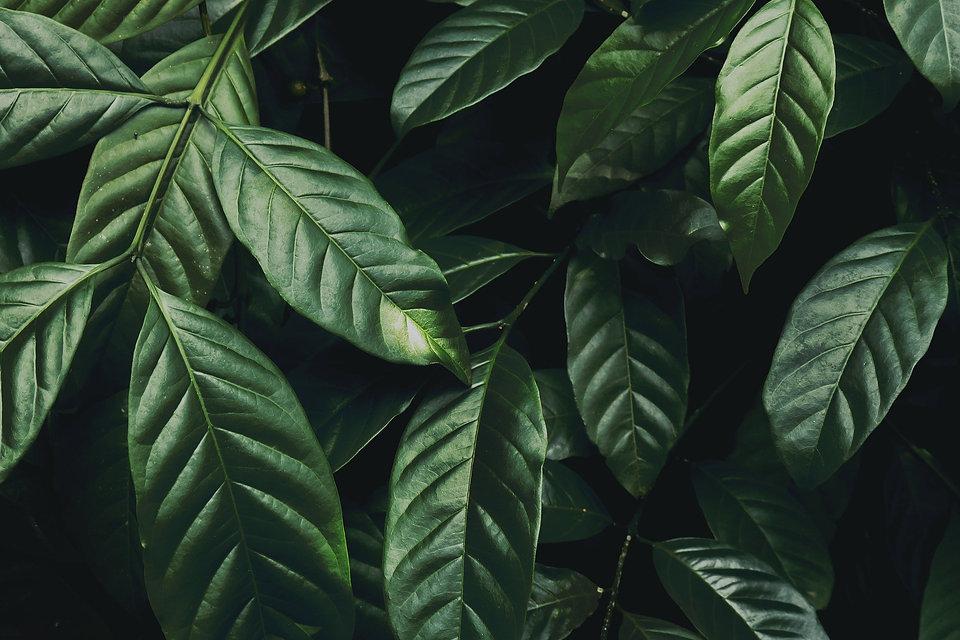 dark-green-plant-3808354_1920_574709ac-a