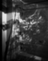 CO Tree in Bathroom_99-B.jpg
