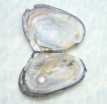 Fascinating pearl formation!