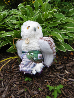 Owls_front