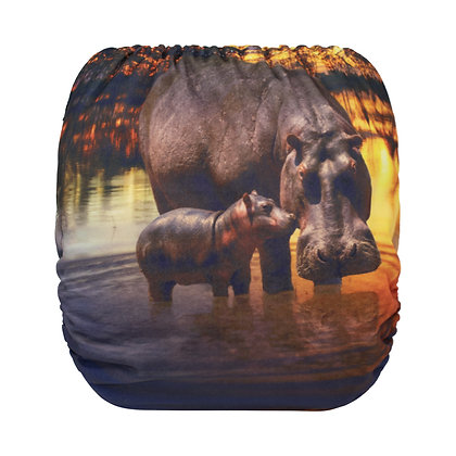 Hippo Sunset