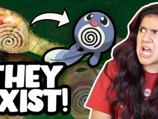 REAL CREATURES That Inspired POKEMON